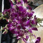 レッスン室のお花
